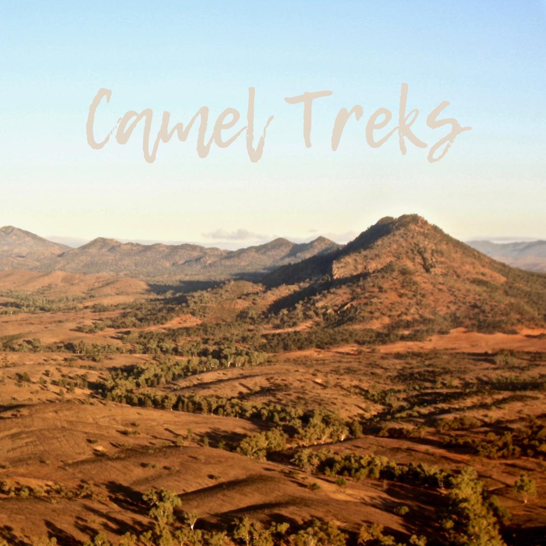 Camel Treks, Flinders Ranges, South Australia, Auslandjobs, work and travel, Tiermedizinische Fachangestellte, Reisen, Arbeiten im Ausland, Freiheit, Wildlife, Tierliebe