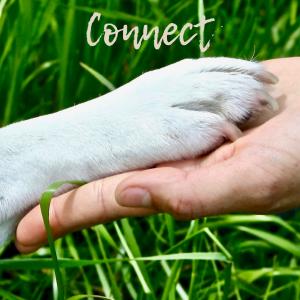Tierisch wildes Lernen, Connect, Verbindung, Austausch, Kontakt